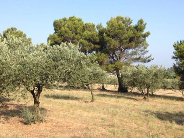 Vente - Terrain agricole - Eygalières - 2612.00m² - Ref : 207
