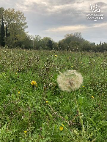 Vente - Terrain agricole - Orgon - 7178.00m² - Ref : 385