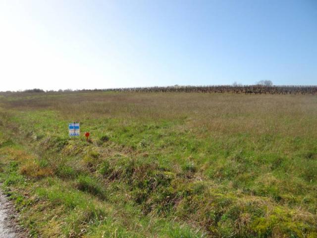Vente - Terrain agricole - Châteauneuf-sur-Charente - 1000.00m² - Ref : 338