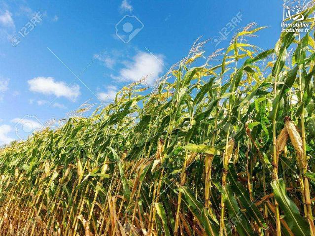 Vente - Terrain agricole - Merzer - 95700.00m² - Ref : TA01062