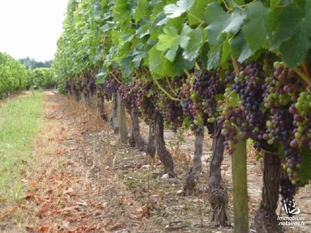Vente - Bien agricole - Saint-Christoly-Médoc - Ref : 100/1638